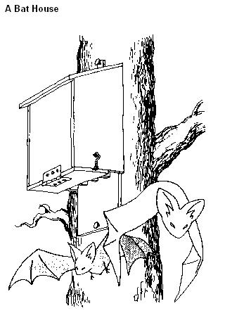 Bat Box Houses Plans